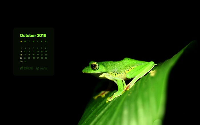 Dark night green frog-October 2016 Calendar Wallpaper Views:1619