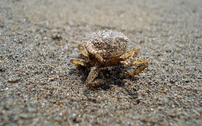 Farbod hosseini nasab Crab-Animal High Quality Wallpaper Views:1334