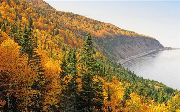 Forest Coast Resources Autumn-Nature High Quality Wallpaper Views:897