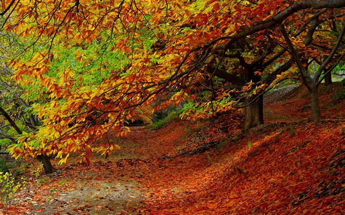 Forest autumn foliage trees-2016 Scenery HD Wallpaper Views:2151