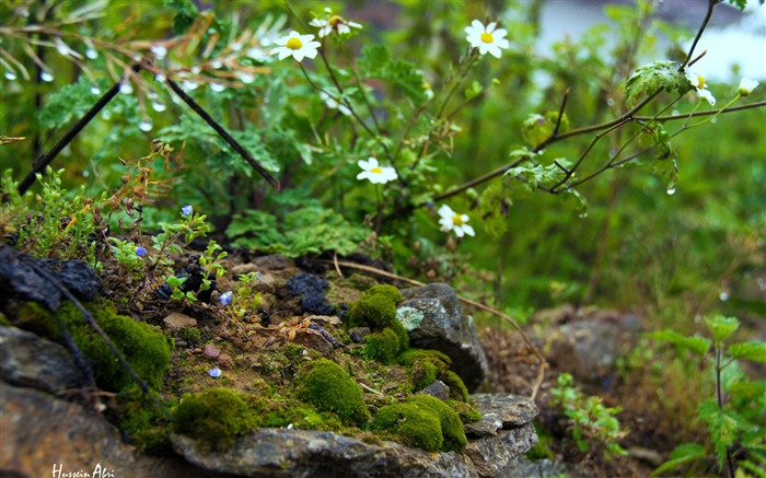 Jungle Flowers Moss Rocks-Nature High Quality Wallpaper Views:955