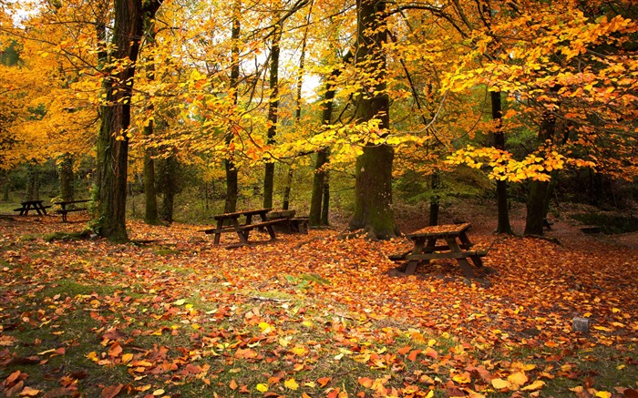 Leaf fall autumn benches-2016 Scenery HD Wallpaper Views:2698