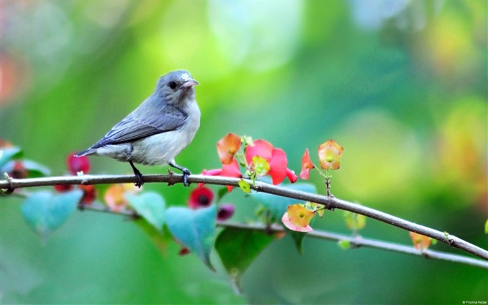 Poorna Kedar small bird-Animal High Quality Wallpaper Views:1533