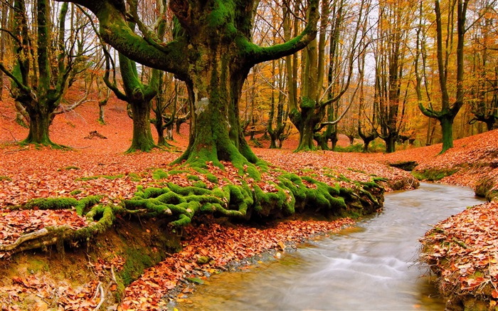 Trees river autumn moss-2016 Scenery HD Wallpaper Views:1335