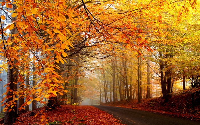 Wood autumn road trees-2016 Scenery HD Wallpaper Views:1387