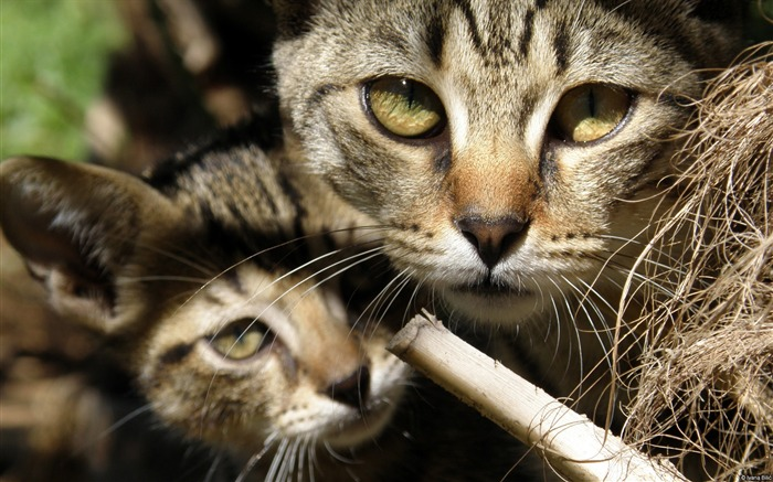 ivana bilic two cats-Animal High Quality Wallpaper Views:1004