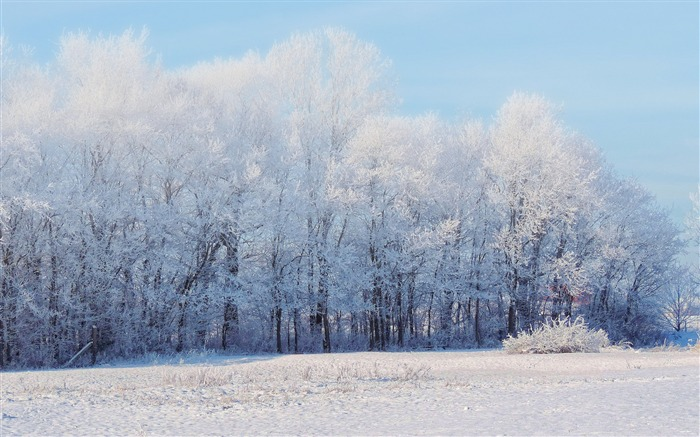 Winter forest snow trees-Scenery High Quality Wallpaper Views:3839 Date:10/23/2016 6:44:15 PM