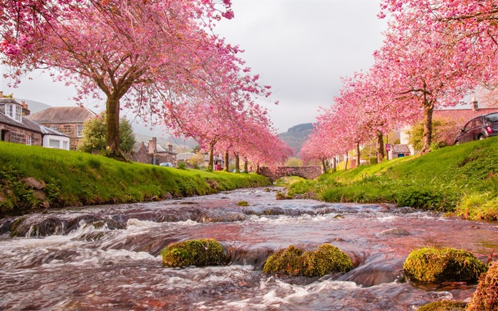 village bridge river flow sakura-Scenery High Quality Wallpaper Views:7053 Date:10/23/2016 6:41:38 PM