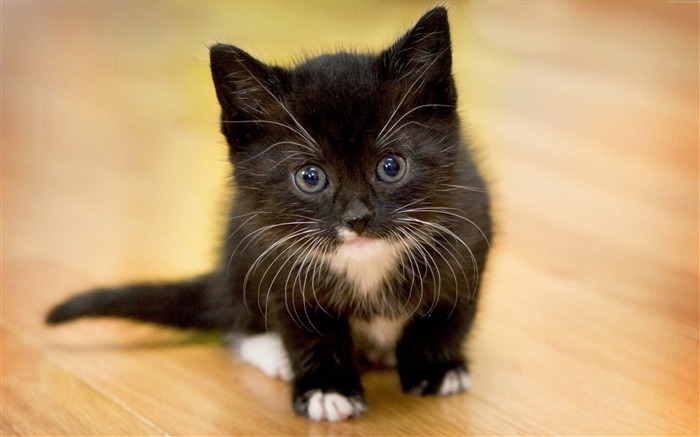 Kitten face spotted-Animal High Quality Wallpaper Views:1183