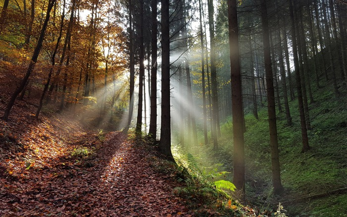 Sunshine in the forest-Nature Scenery Wallpaper Views:998
