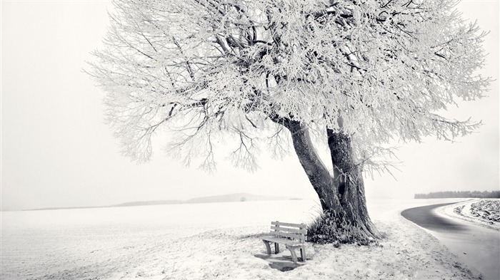 Winter snow bench tree frost-2016 Nature HD Wallpaper Views:1146