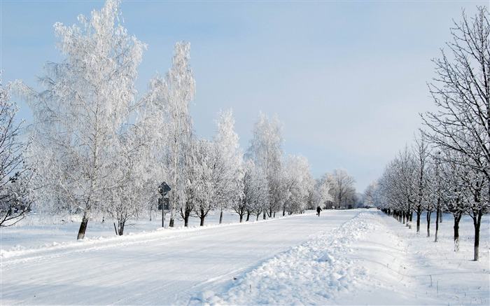 Winter snow road avenue trees person-2016 Nature HD Wallpaper Views:1290