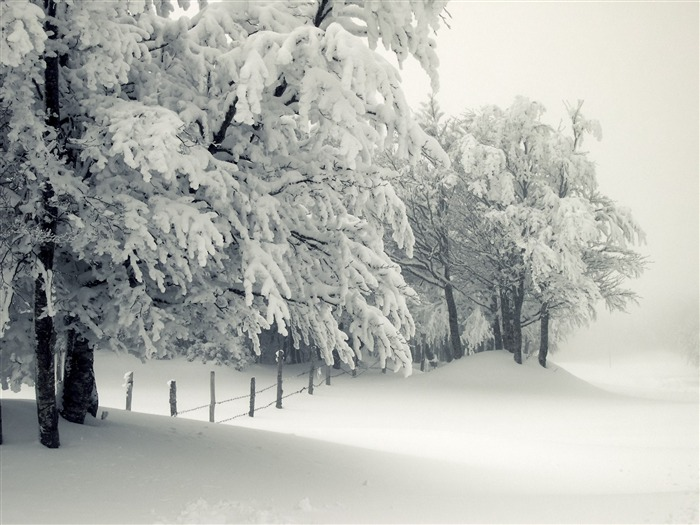 Winter snow storm trees frost snow drifts-2016 Nature HD Wallpaper Views:793