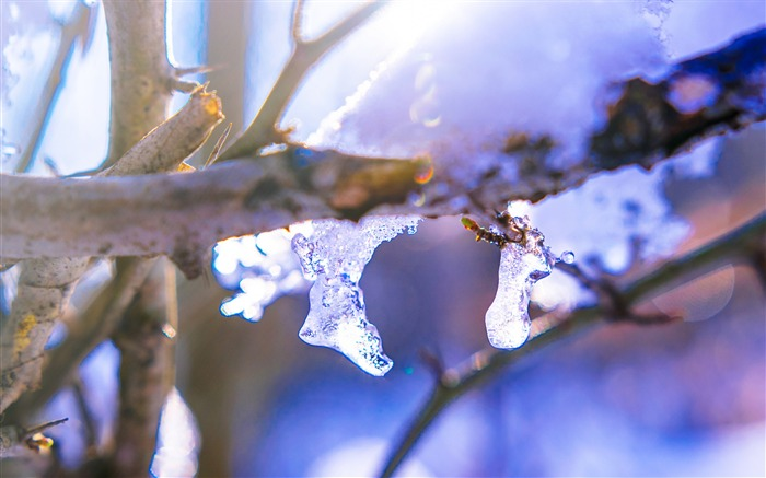 Branch ice winter-2016 High Quality HD Wallpaper