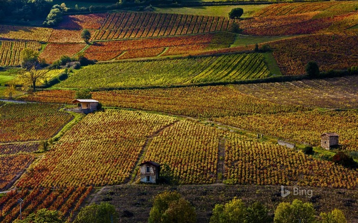 France Vineyards near Beaujeu Rhone-2016 Bing Desktop Wallpaper Views:638