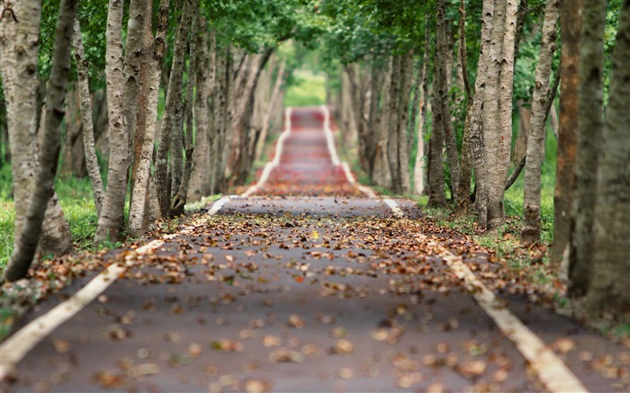 Jungle tree lined road-Nature High Quality HD Wallpaper Views:5114 Date:12/10/2016 10:36:12 PM