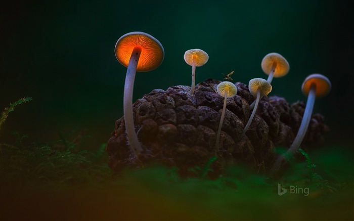 Netherlands Mushrooms in the Dark Dunes near Den Helder-2016 Bing Desktop Wallpaper Views:1050