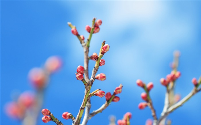 Spring flower buds-Flowers Photo HD Wallpaper Views:1233