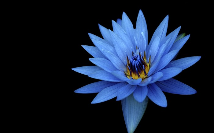Title:Stock blue flower-Flowers Photo HD Wallpaper Views:207