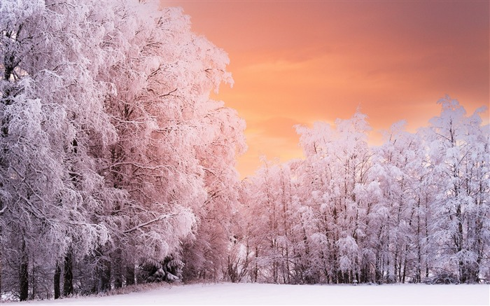 Winter forest sunset-World Travel HD Wallpaper Views:932