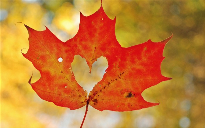 Love heart maple leaf-High Quality HD Wallpaper