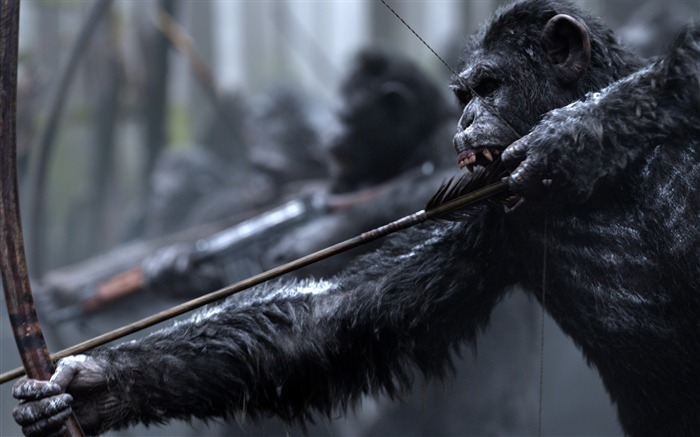 War for the planet of the apes-2017 Movie HD Wallpaper Views:997