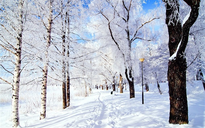 Winter forest snow-Scenery HD Wallpaper Views:1483