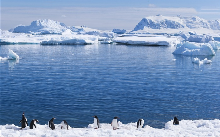 Antarctic continent penguin animal wallpaper 06 Views:4699 Date:2/5/2017 7:35:32 AM