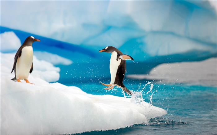 Antarctic continent penguin animal wallpaper 08 Views:3546 Date:2/5/2017 7:36:20 AM