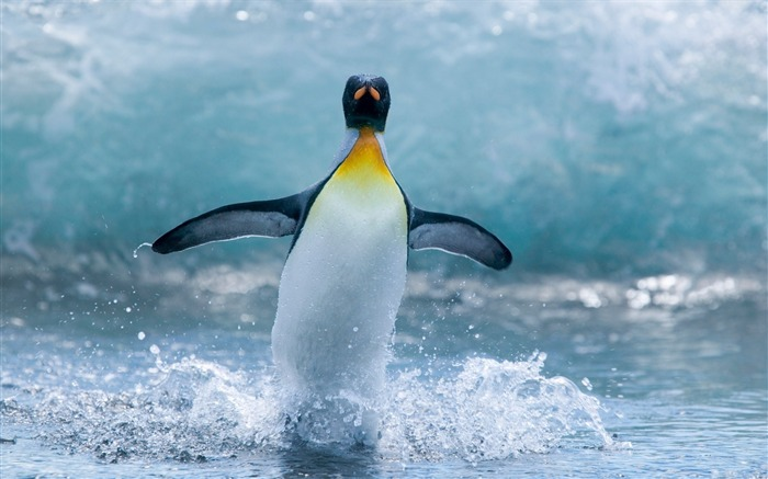 Antarctic continent penguin animal wallpaper 16 Views:1912 Date:2/5/2017 7:39:55 AM