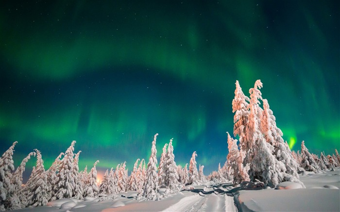 Aurora borealis winter forest snow-High Quality Wallpaper Views:1015