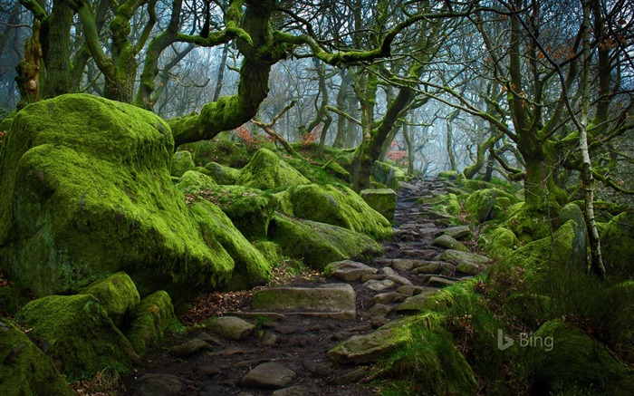 England Forest path in Padley Gorge in Derbyshire-2017 Bing Desktop Wallpaper Views:1342