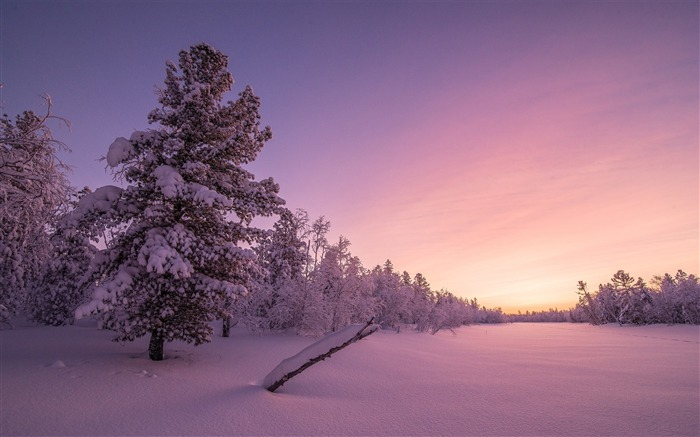 Frosty sunrise forest-High Quality Wallpaper Views:1324