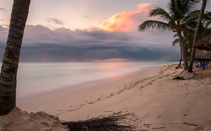 Palm tree on shore near beach sunset-High Quality Wallpaper Views:905
