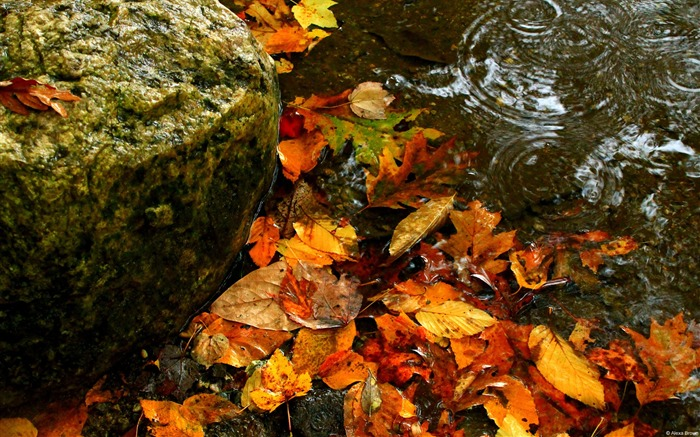 Autumn leaves water-Windows 10 Desktop Wallpaper
