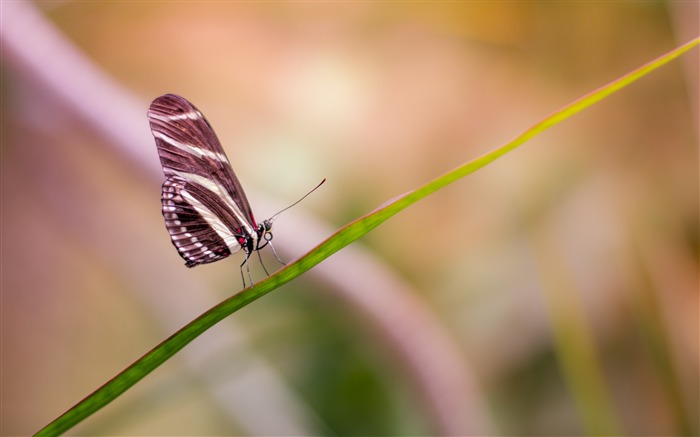 Butterfly wings close up-2017 High Quality Wallpaper Views:1651