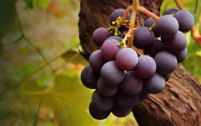 Fruit grapes harvest season theme wallpaper 01