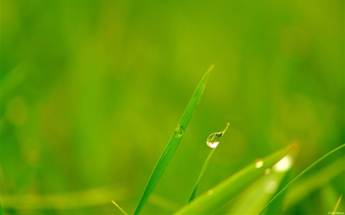 Grassland dewdrops-Windows 10 Desktop Wallpaper