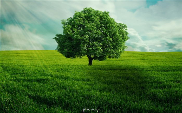 Green tree alone-2017 High Quality Wallpaper