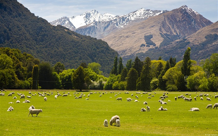 New zealand countryside-Country Nature Scenery Wallpaper
