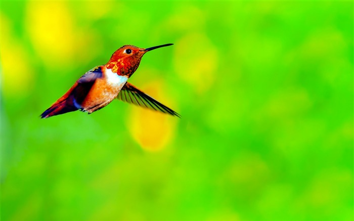 Spring Cute Hummingbird Photo Themed Wallpaper Views:1786