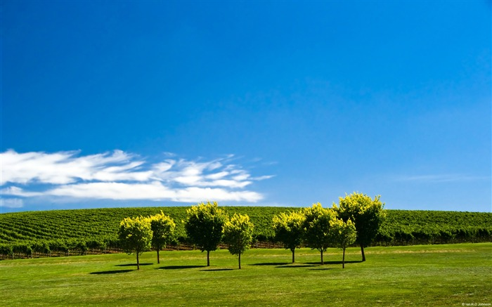 Vineyard adelaide hills south australia-Country Nature Scenery Wallpaper