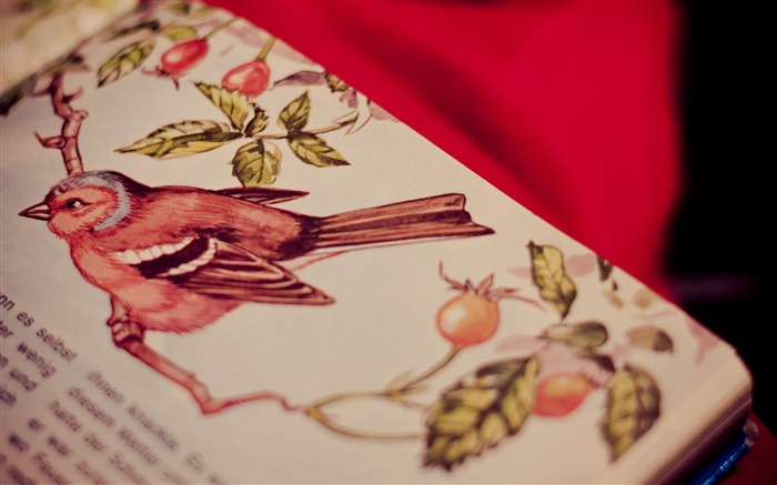 Paint bird table-Vintage Themed Wallpaper Views:1123