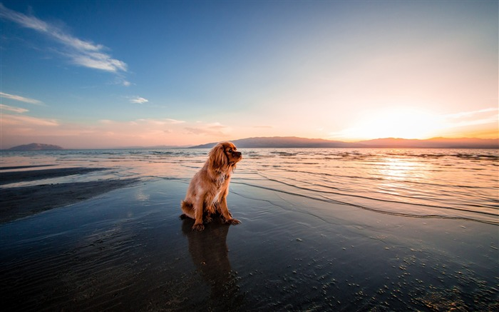Dog dusk beach seashore-2017 Animal Wallpaper Views:1285