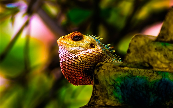 Title:Iguana reptile scales colorful-2017 Animal Wallpaper Views:134