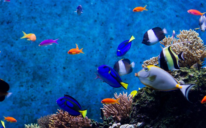 The real dory-2017 Animal Wallpaper Views:1128