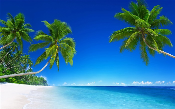 Tropical beach paradise palms-Nature HD Wallpapers Views:290