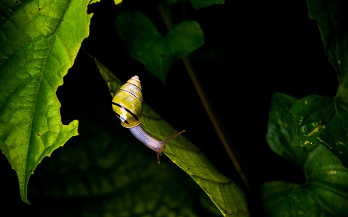 Striped snail on green leaf-2017 High Quality Wallpapers Views:643