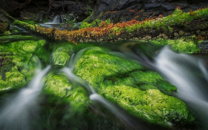 A forest stream in Gwaii Haanas National Park Reserve and Haida Heritage Site 2017 Bing Wallpaper Views:979