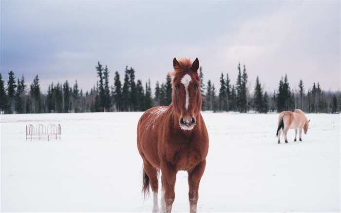 Horse winter snow forest Animal Wallpaper Views:515